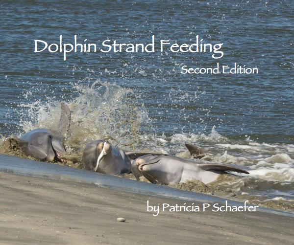 dolphin-strand-feeding-v2